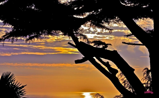 sunset tree..