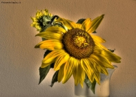 Foto Precedente: Sunflower